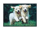 Vaip Lovely Dogs 50x75 cm A5-101717