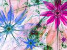 Fliis-fototapeet Flower silhouettes 360x270 cm ED-109410