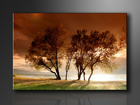 Seinapilt Trees 120x80 cm ED-114374
