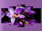 Viieosaline seinapilt Orchids 1, 100x60 cm ED-119765