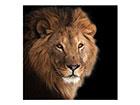 Pilt Lõvi, 50x50 cm EV-120558