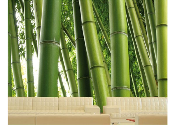 Fototapeet Paradise of Bamboo 400x280 cm ED-123849