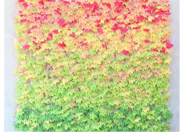 Fliis-fototapeet Leaves 360x270 cm ED-128175