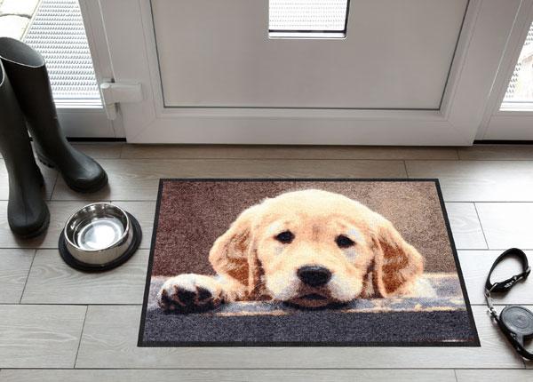 Uksematt Nosy Dog 50x75 cm A5-129643