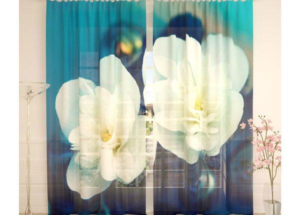 Tüllkardinad Jasmine 290x260 cm AÄ-138225