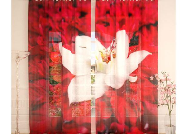 Tüllkardinad White Flower on Red 290x260 cm AÄ-138240