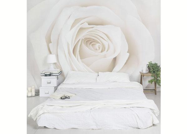 Fliis fototapeet Pretty White Rose ED-138511
