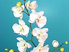 Orhidee Phalaenopsis 2tk DA-36412