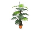 Palmipuu 120cm DA-44710