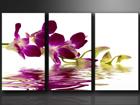 Kolmeosaline seinapilt Orhidee ED-67577
