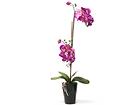 Kunstlill Roosa orhidee 72 cm EV-69043
