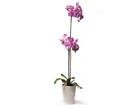 Kunstlill Heleroosa orhidee 72 cm EV-69046