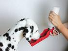 Kaasaskantav joogipudel loomadele 0,5l UR-74006