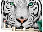 Fototapeet White Tiger 280x200cm ED-76595