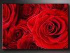 Seinapilt Roosid 120x80 cm ED-86182