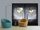 Fotokardin Black Cat, 280x245 cm ED-87050