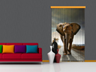 Poolpimendav fotokardin Elephant 140x245 cm ED-87446