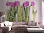 Fototapeet Purple tulips 360x254 cm ED-88074
