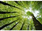 Fototapeet Forest dreams 400x280 cm ED-88101