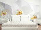 Fliis-fototapeet White orchid 360x270 cm ED-90693