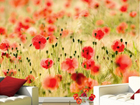 Fototapeet Dream of poppies 400x280 cm ED-92508