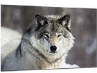 Klaaspilt Wolf 80x120 cm QA-94174