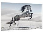 Klaaspilt Horse 80x120 cm QA-94175