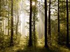 Fliis-fototapeet Forest 3 360x270 cm ED-94827