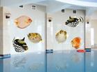 Klaasikleebis Fish Set 130x64 cm ED-96710
