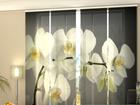Läbipaistev paneelkardin Song Orchids 240x240 cm ED-97597