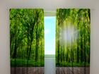 Pimendav kardin Forest at the doorstep 240x220 cm ED-97975