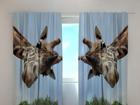 Poolpimendav kardin Giraff 240x220 cm ED-98019