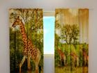 Poolpimendav kardin Giraffes 240x220 cm ED-98022