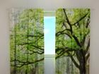 Läbipaistev kardin Green tree 240x220 cm ED-98149