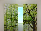Poolpimendav kardin Green tree 240x220 cm ED-98150