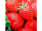Pilt lõuendil Maasikad 40x40 cm AL-99856