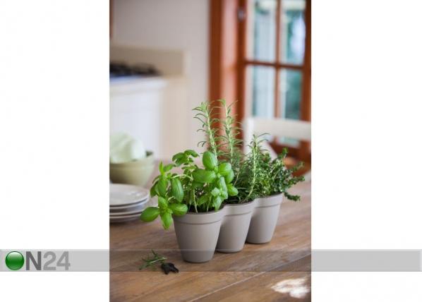 Istutuspott Keter Ivy Herbs TE-109002