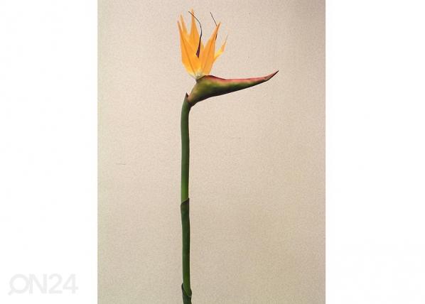 Paradiisilinnu lill 1tk DA-36409