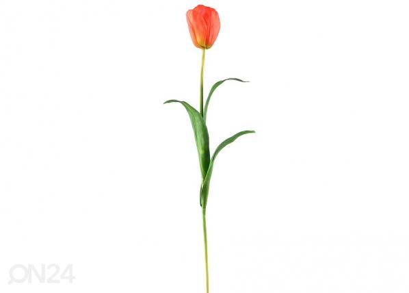 Tulp 3tk DA-36415