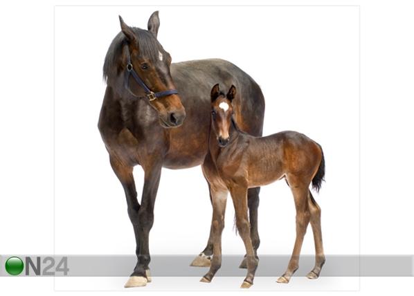 Fototapeet Trakehner horses 300x280cm ED-64868