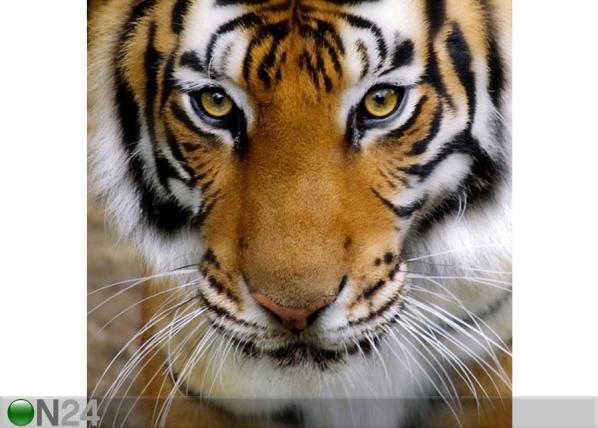 Pilt lõuendil Tiiger 50x50 cm AL-75367