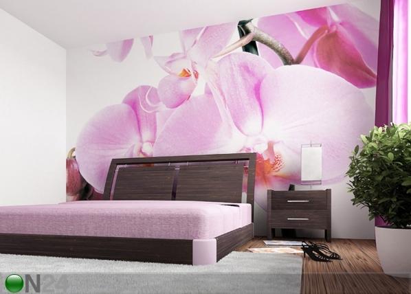 Fototapeet Purple orchid 360x254 cm ED-88058