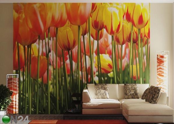 Fototapeet Tulips 360x254 cm ED-88072