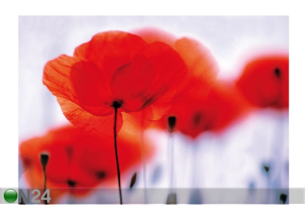 Fototapeet Magical poppies 400x280 cm ED-88123