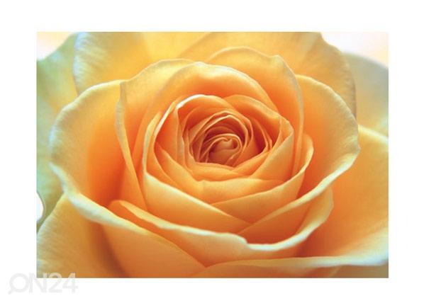 Fototapeet The orange rose 400x280 cm ED-88125