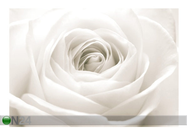 Fototapeet The white rose 400x280 cm ED-88127