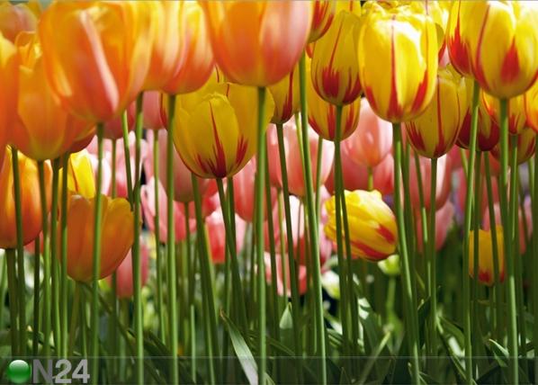 Fliis-fototapeet Tulips 360x270 cm ED-94806