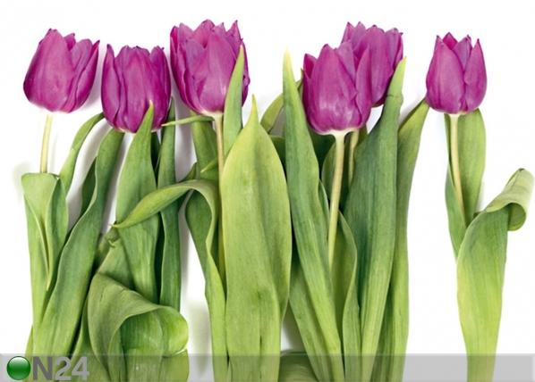 Fliis-fototapeet Tulips 2 360x270 cm ED-94807